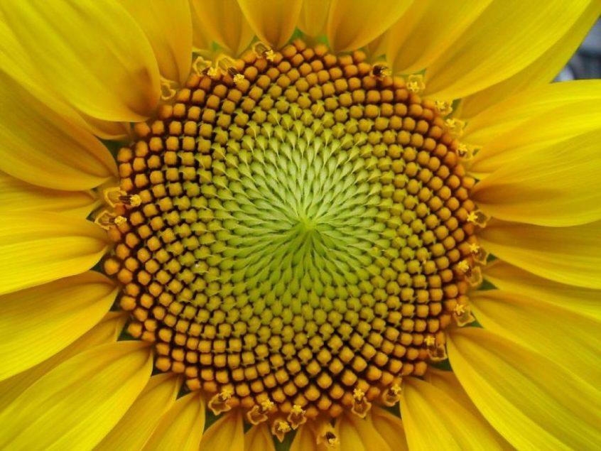 Naturopatia & Frequenze